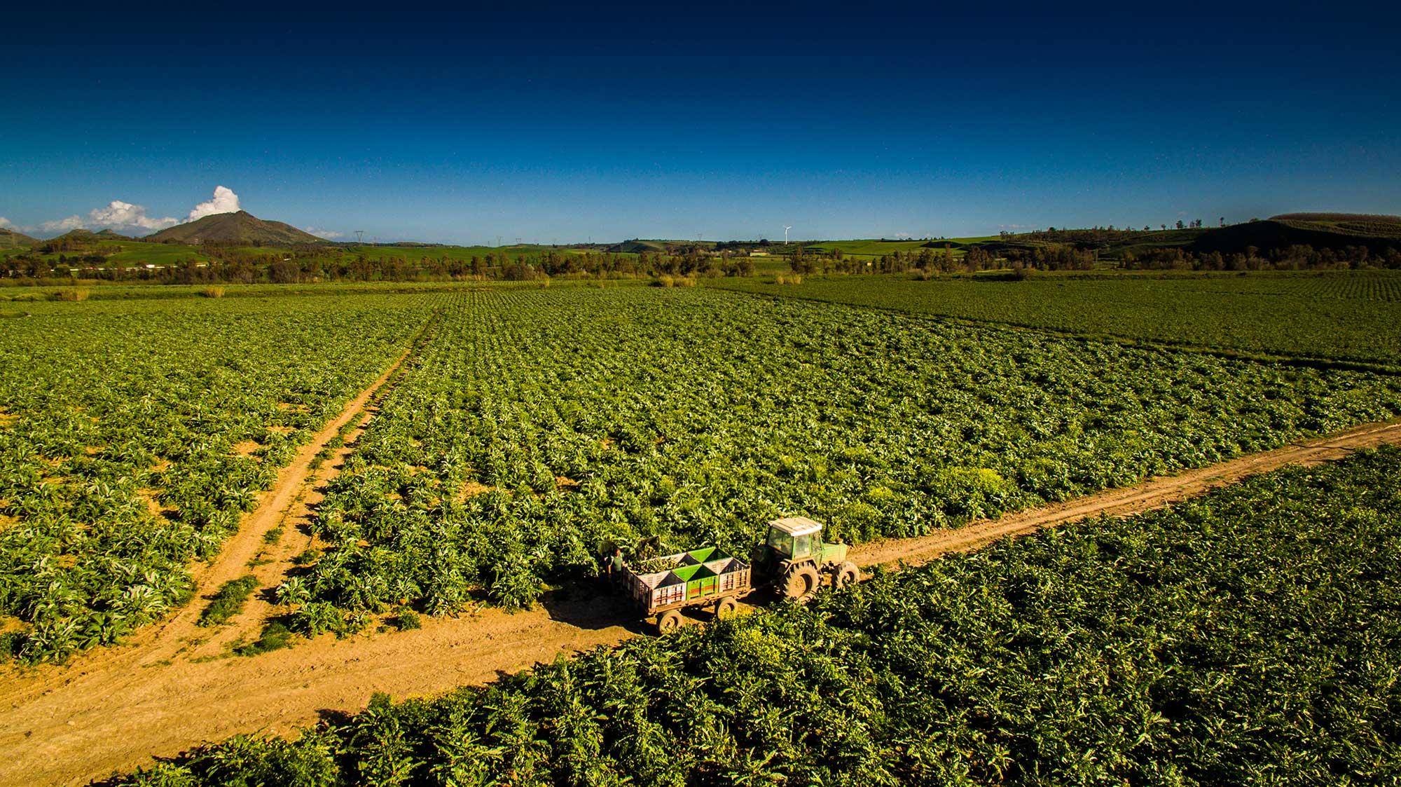 Azienda agricola Fratelli PIras