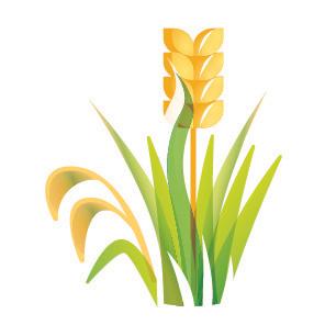 fodder production